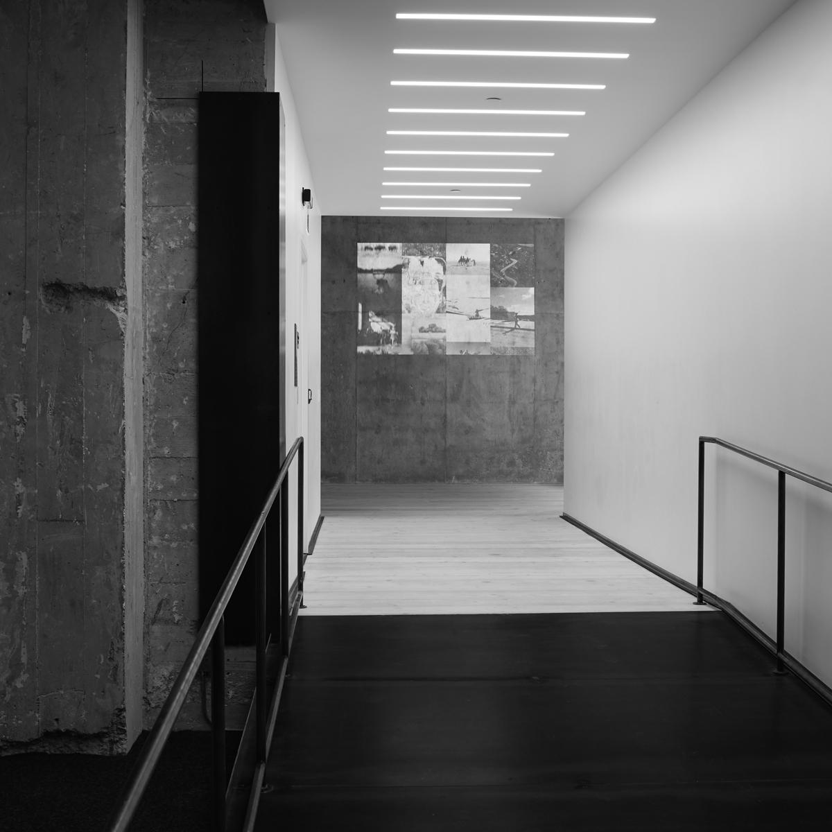 vsco oak | DeBartolo Architects